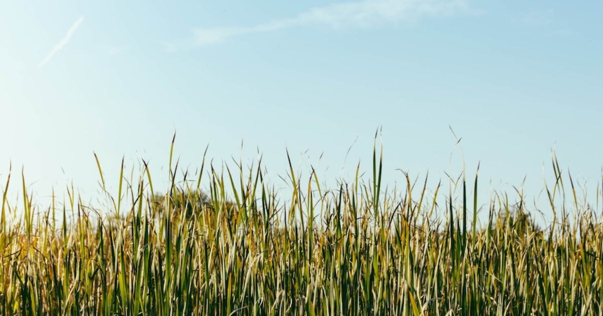 grass wisconsin
